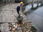 Tin tức - Cá chết trắng hồ Hoàng Cầu do thời tiết?