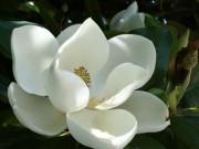 """Nhà đẹp - Đã tìm thấy """"cành hoa sen"""" gây tranh cãi trong ca dao?"""