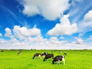 Tin tức thị trường - Vinamilk tiên phong mở lối cho thị trường sữa tươi Vinamilk Organic đạt chuẩn