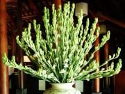 Nhà đẹp - Loại hoa nào cấm kỵ cúng trên bàn thờ?