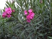 Nhà đẹp - Lợi bất cập hại khi bà nội trợ lùng sục trồng hoa cỏ dại