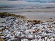 Tin tức - Thủ tướng: Tăng thời gian hỗ trợ ngư dân vùng cá chết