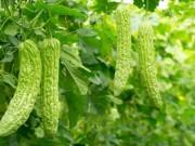 Nhà đẹp - Những loại cây cho quả nhanh lớn, ăn ngon mà còn giúp nhà mát rượi