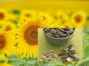 Nhà đẹp - 9 bí mật hay ho ít người biết về hoa hướng dương