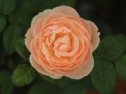 Nhà đẹp - HN: Vườn trên mái ngập tràn cây hoa đẹp - độc - lạ