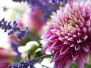 Nhà đẹp - 8 sai lầm thường gặp khiến hoa cắm nhanh úa tàn