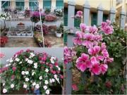 Nhà đẹp - Mẹ trẻ trồng vườn ngập sắc hoa tại thiên đường Mộc Châu