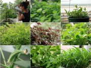 """Nhà đẹp - Chăm vườn rau sân thượng - tuyệt chiêu """"cơm lành canh ngọt"""" của vợ chồng trẻ"""