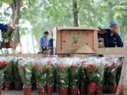 """Nhà đẹp - Thủ đô Hà Nội đang được trang trí bằng """"hoa lạ""""?"""