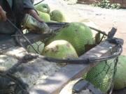 Mua sắm - Giá cả - Trái cây đẹp nhờ hóa chất