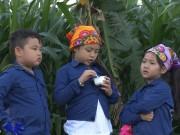 Làm mẹ - Tập 11 Bố ơi mùa 2: Trải nghiệm cho bò ăn cỏ ở cao nguyên Mộc Châu