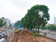 Tin tức - HN: Đốn xà cừ đường Láng, xây cầu vượt nút Cầu Giấy