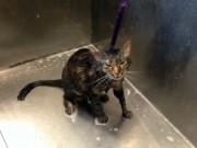 """Clip Eva - Mèo ghét tắm, """"cãi chủ"""" như người"""