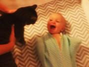 Clip Eva - Bé sơ sinh phấn khích tột độ khi thấy mèo trong cũi