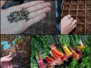 """Nhà đẹp - """"Bỏ túi"""" cách trồng cải cầu vồng siêu ngon-bổ-đẹp"""