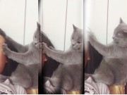 """Hài hước: Mèo """"mát xa"""" cho chủ"""