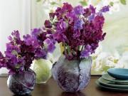 Nhà đẹp - Cắm hoa vào bắp cải: sang nhà mà độc đáo