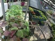 Nhà đẹp - Một năm trồng rau ngập vườn của mẹ 8x Hà thành