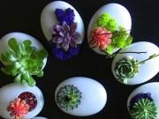 Nhà đẹp - Trồng cây trong vỏ trứng - lựa chọn tuyệt vời!