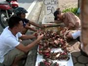 Mua sắm - Giá cả - Truy tìm nguồn gốc cua biển siêu rẻ bán tràn lan ở HN
