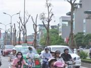 Tin tức - Chuyên gia Nguyễn Lân Hùng: Hà Nội rất phù hợp trồng phượng