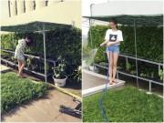 Nhà đẹp - Ngọc Trinh khoe vườn rau sạch 200m2