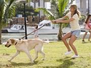 10 điều bạn hay làm khiến cún cưng khó ở