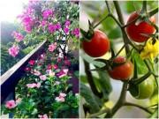 Nhà đẹp - Thích mê ban công 5m2 đầy rau quả của cô giáo trẻ