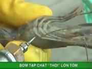Clip Eva - Video: Công nghệ thổi lớn tôm bằng tạp chất rau câu