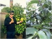 Nhà đẹp - Vườn nhà ở Mỹ trĩu trịt cây trái Việt của Quang Lê