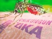 Tin tức - Phát hiện trường hợp nhiễm virus zika ở Phú Yên