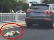 Clip Eva - Video: Lái xe tàn bạo kéo lê chú chó trên đường cho đến chết