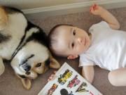 Làm mẹ - Không ngờ sau 5 năm, cặp đôi bé Nhật và chú chó Maru nổi tiếng đã thay đổi đến vậy