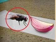 Nhà đẹp - Cắt một dải giấy và mẹo nhỏ này sẽ giúp đuổi ruồi đi