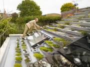 Nhà đẹp - Lạ mắt nhà 2 tầng xây vườn bậc thang trên mái