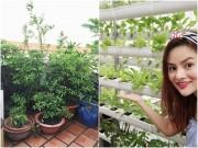 Nhà đẹp - Vũ Thu Phương rạng rỡ khoe vườn thủy canh đủ rau 'ăn tẹt ga'