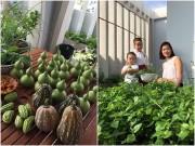 Nhà đẹp - Mê mệt vườn rau quả hữu cơ xanh mướt của mẹ 8X ở Sài Gòn