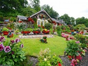 Mê mẩn vườn nhà đẹp như thiên đường của ông cụ 75 tuổi