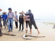 Tin tức - Biển miền Trung sẽ tự đào thải độc tố?