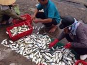 """Tin tức - Vì sao khó khẳng định cá ở miền Trung """"ăn được chưa""""?"""