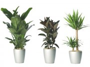 """Nhà đẹp -  """" Lười chăm bón """"  - hãy chọn 10 loại cây này cho nhà thêm xanh"""