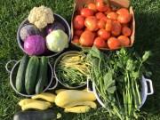 Nhà đẹp - Cô dâu Việt trồng rau trên đất Mỹ thu hoạch nhiều không xuể