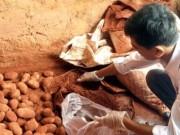 Mua sắm - Giá cả - Chặn nông sản Trung Quốc đội lốt Đà Lạt