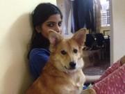 Tin tức - Cô gái từ chối lời cầu hôn chỉ vì chồng sắp cưới... không thích chó