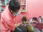 Tin tức - Người Sài Gòn vung tiền triệu để làm đẹp chó cưng