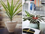 Nhà đẹp - 5 loại cây dễ trồng giúp hút sạch khí độc trong nhà