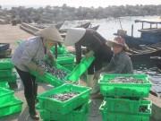 Những loại hải sản nào ở vùng biển miền Trung chưa đảm bảo an toàn?
