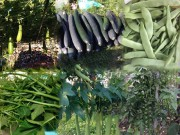 Nhà đẹp - Thăm vườn rau quả trĩu trịt của mẹ Việt trên đất Slovakia