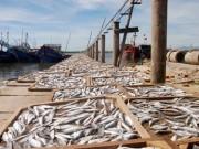 Chất độc có trong 132 mẫu hải sản ở miền Trung nguy hiểm thế nào?