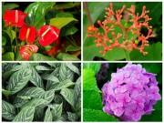 """Nhà đẹp - 4 loài cây độc """"vô tình"""" được trồng trong nhà"""